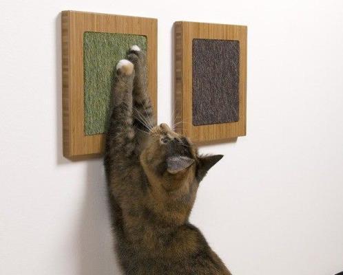 Антивандальные покрытия особенно актуальны для помещений, где есть животные