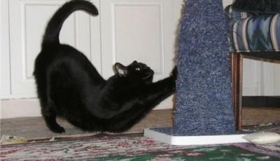 когтеточка чтобы кот не рвал обои