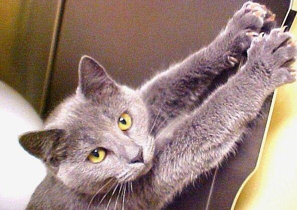 Почему кот дерет обои