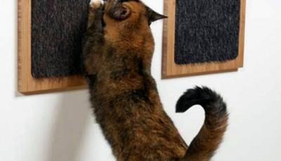 поверхность на стене чтобы кот не рвал обои
