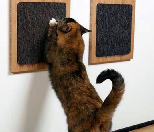 Ремонт что не дерут коты