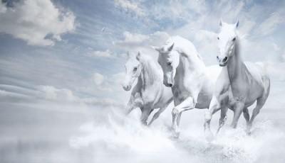 Фотообои лошади на стену скачут