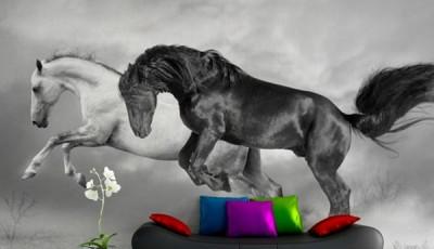 фотообои лошади черно белые