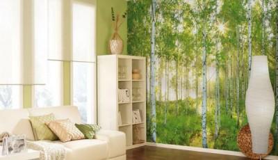 фотообои природа лес березы