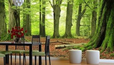фотообои с лесом рядом со столом