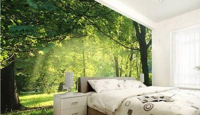 фотообои широкие лес