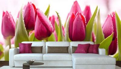 фотообои тюльпаны бутоны
