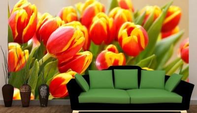 фотообои тюльпаны красно желтые