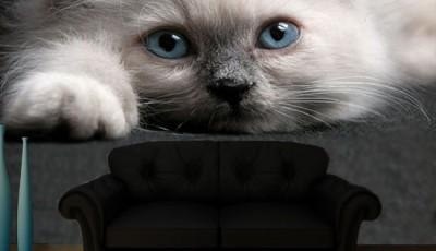 Фотообои с животными для стен котенок