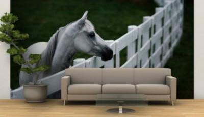 Фотообои с животными для стен лошадь