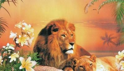 Фотообои с животными для стен львы
