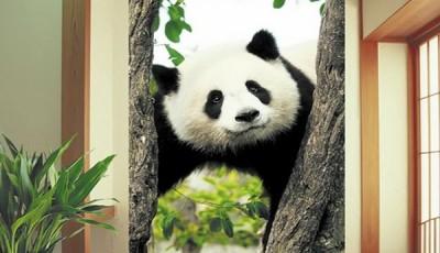 Фотообои с животными для стен панда