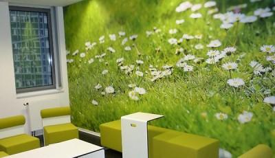 Фотопечать на обоях с цветами ромашками на всю стену