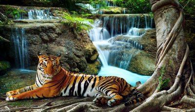 Фотообои водопад с тигром
