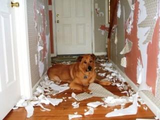 Как отучить собаку грызть и рвать обои