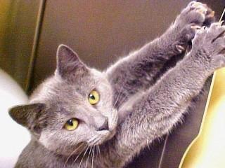 Что делать, если ваш кот дерет обои и как его отучить